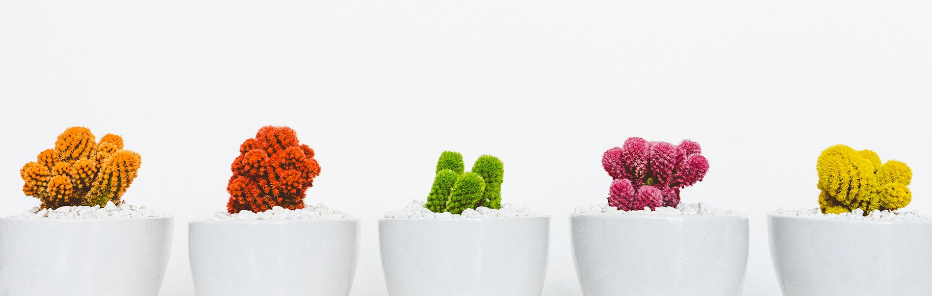 multicolored cactuses arranged in a row